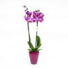 Orquídea Variada