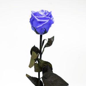 Rosa Preservada Lila